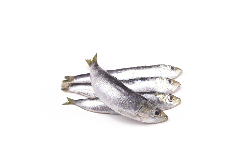 sardinha-pequena